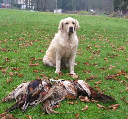 Cathy last in pheasantry