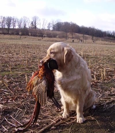 Cathy - pheasantry