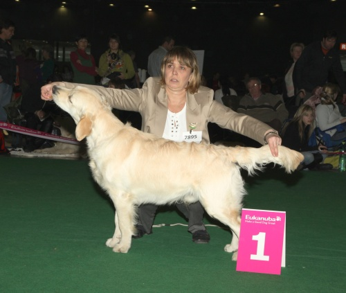 Brno2011-puppy cl._DanteVP1