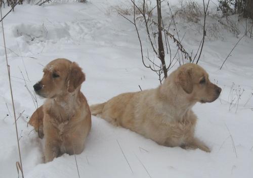 C+L ve sněhu
