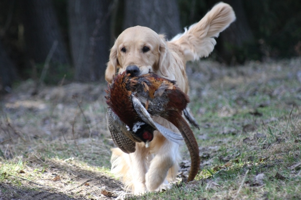 Lexy with pheasant